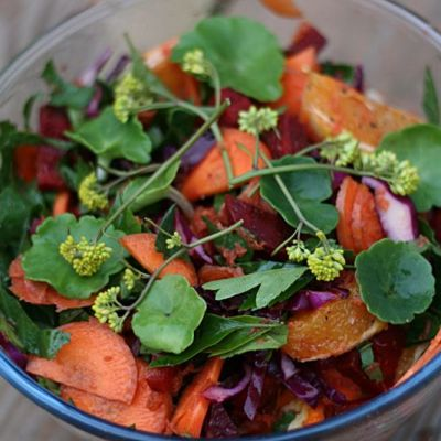 Salad made with our organic carrots, chard and foraged greens